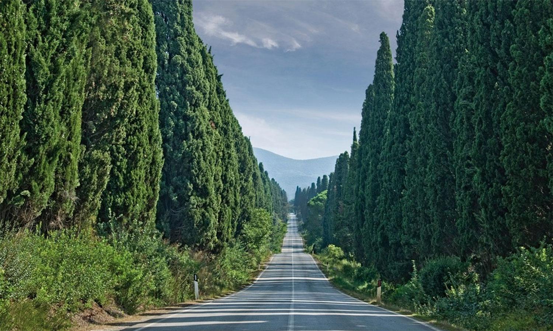 Guida turistica di Bolgheri