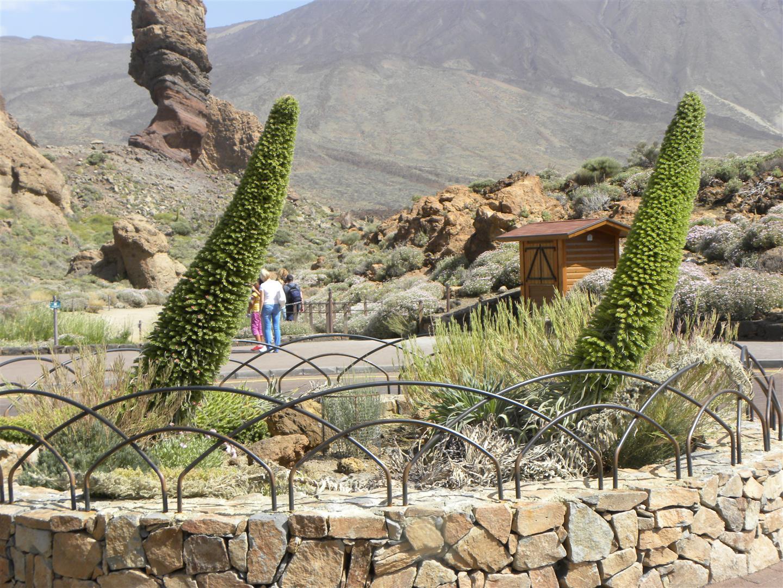 Escursione al Parco Nazionale del Teide