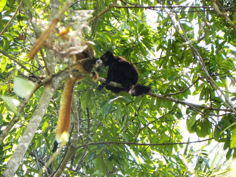 Madagascar – Escursione alla riserva di Lokobè