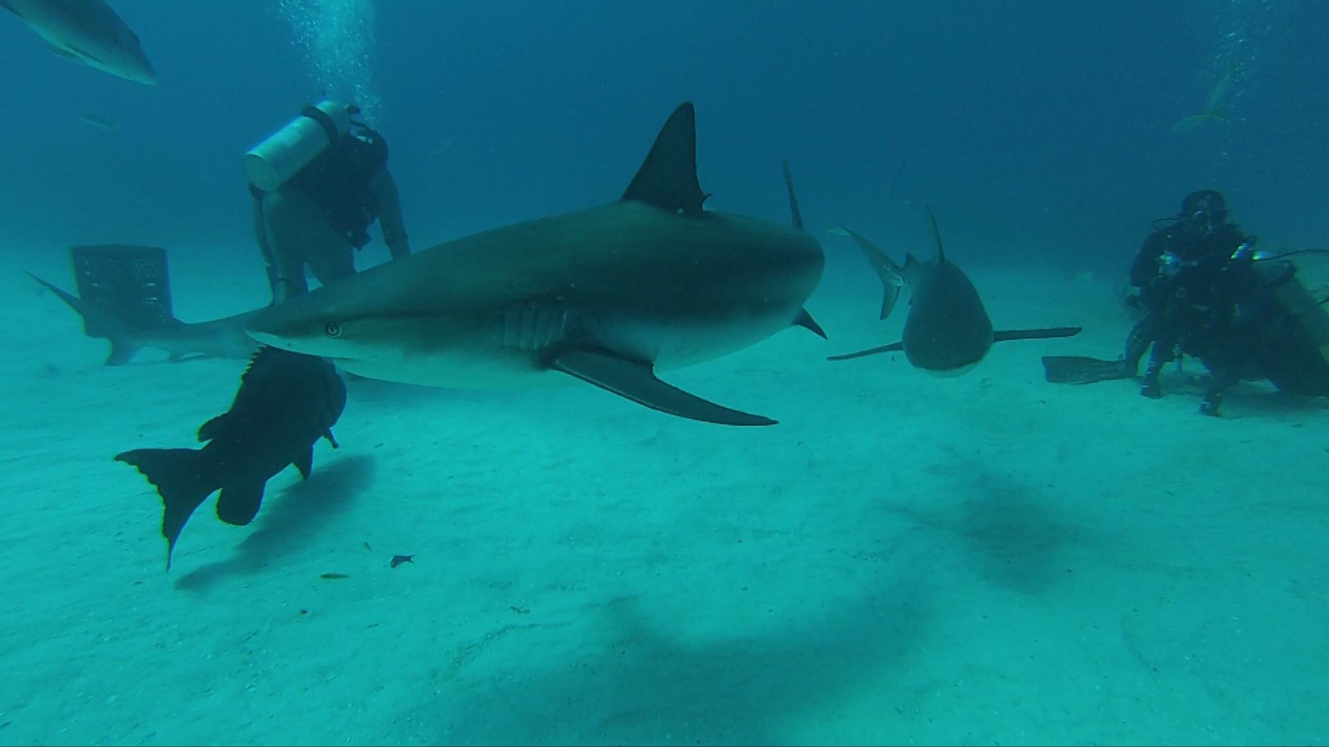 Centro Diving Bravo Viva Wyndham Fortuna Beach