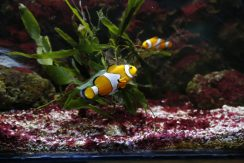 f1_52_foto_acquario_nemo (FILEminimizer)